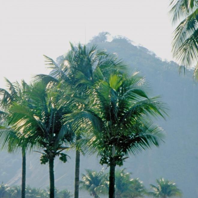 Une atmosphère tropicale